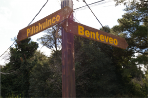 pillahuinco y benteveo